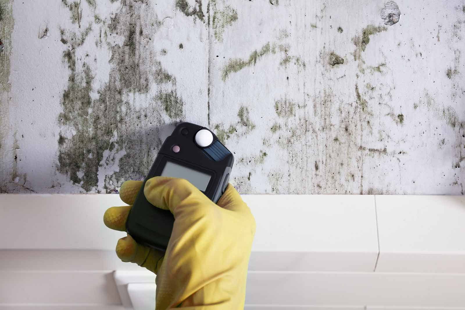 Detecting mold in commercial walls
