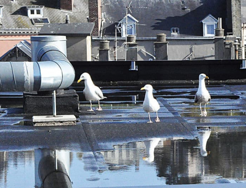 How To Stop Water Accumulating On Flat Roof