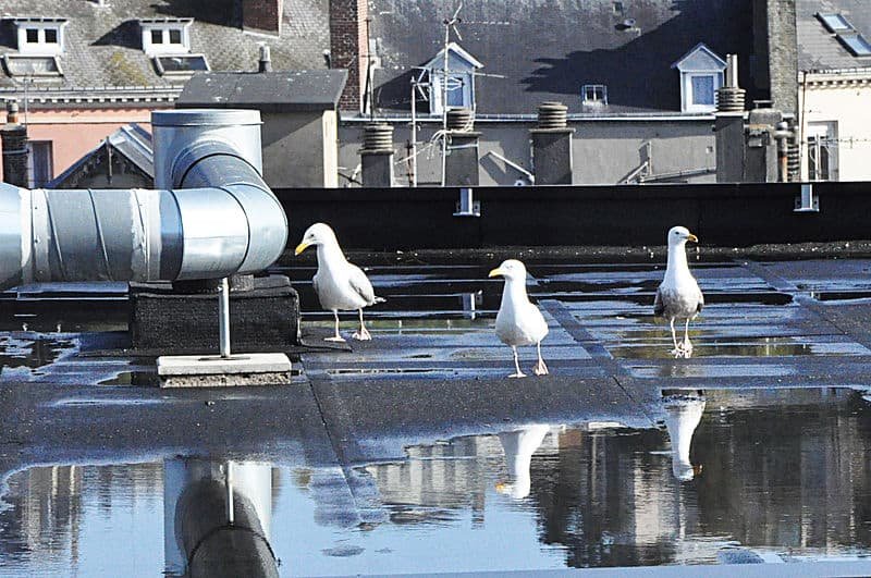 How-to-stop-water-accumulating-on-flat-roof